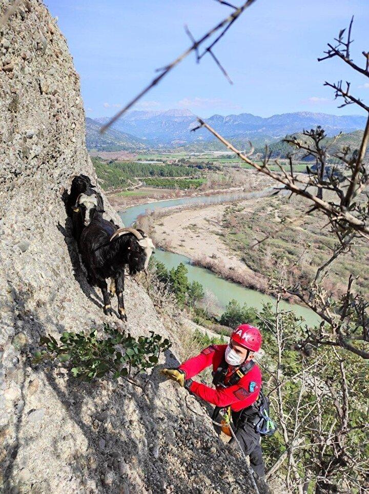Keçilerin mahsur kaldığı Kuşçalı mevkiindeki kayalık alana gelen Jandarma Asayiş ve İl Jandarma Komutanlığı JAK timi yaklaşık 4 saatlik çalışma gerçekleştirdi.
