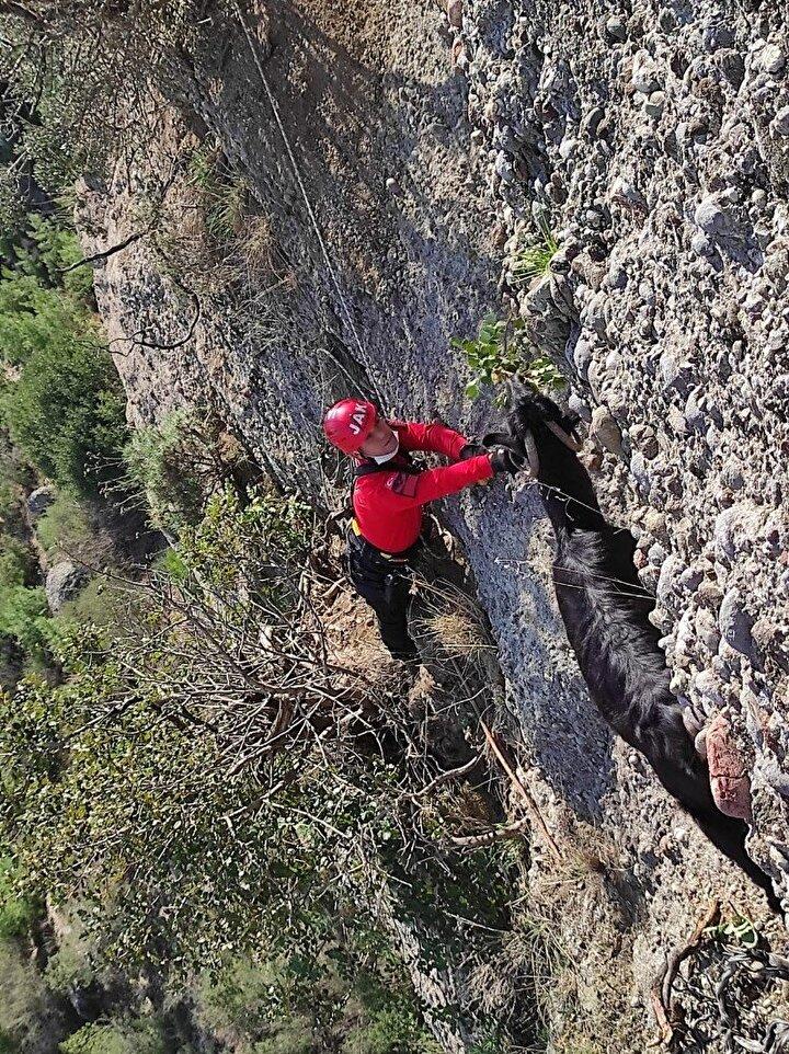 Antalyanın Serik ilçesinde M.T. isimli vatandaşın hayvanlarını otlattığı sırada 3 gebe keçisinin kayalık alanda uçurumun kenarında mahsur kaldığı ihbarı üzerine Serik İlçe Jandarma Komutanlığı ekipleri harekete geçti.