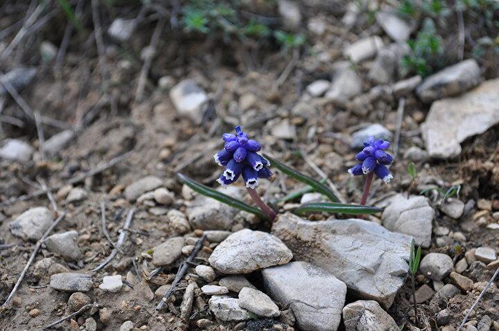 Türkiyenin tek başına Avrupa kıtasındaki kadar bitki türüne sahip olduğunu dile getiren Fidan, Türkiye, endemik bitkiler açısından son derece zengin bir bölgedir. Bitkilerin yaklaşık yüzde 30-35i oranında endemik bitki barındırıyor. Bu da çok büyük bir oran. Biz de endemik bitki bulmak amacıyla çalışmalarımızı sürdürüyoruz dedi.