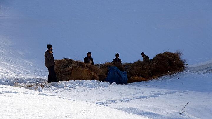 Sabah saatlerinde karla örtülü bölgeye doğru yola çıkan besiciler, saatler süren zorlu yolculuğun ardından biriktirdikleri otlara ulaşıyor.