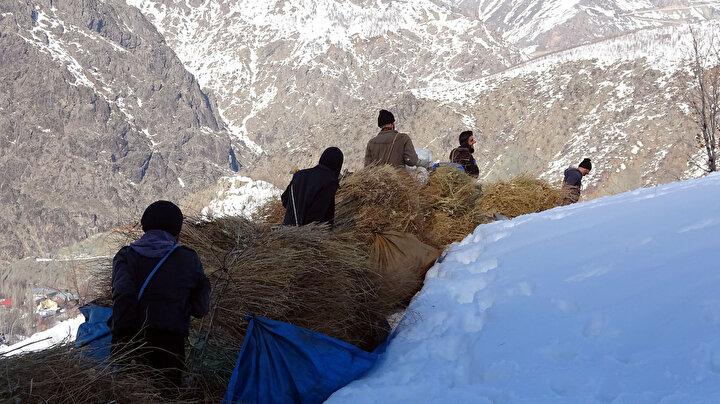 Karlı tepelerden kızaklarla hayvanları için ot indiriyorlar