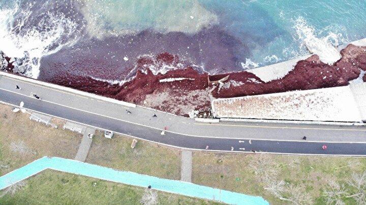 Kadıköy Caddebostan sahilinde havanın aydınlanmasıyla beraber sahile vuran kırmızı yosunlar ve çöpler göze çarptı.