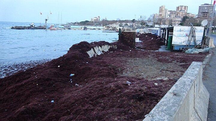 Caddebostan sahilini ve kayalıkları, kırmızı yosunlar ve çöpler kapladı