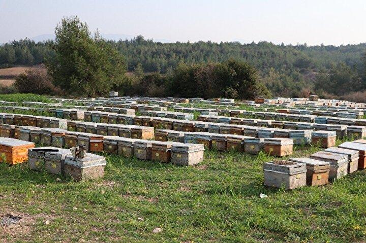 Arıcılar yasaklı tarım ilaçlarından arılarının zehirlendiğini düşünürken arıcılardan birisi bahçelerin içerisinde Kanada merkezli bir firmaya ait tarlalardaki yabancı otlar için kullanılan ilacın kutusunu buldu. İlacın üzerinde yazan 'Arılara zehirlidir. Balıklara zehirlidir, su kaynaklarına bulaştırmayınız' yazısını da yetkililere gönderen arıcılar şimdi gözleri yaşlı kara kara ne yapacaklarını düşünüyor.