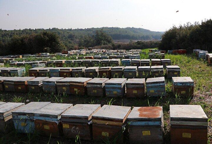 Öte yandan, geçtiğimiz aylarda da merkez Seyhan ilçesine bağlı Yalmanlı Mahallesi'nde Seyhan Nehri'nin suyu çekilmesi nedeniyle on binlerce arı telef olmuştu.