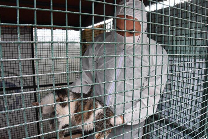 Eskişehir'de önceki dönemlerde yılda 1 kez sahipsiz sokak kedilerinde görülen ölümcül ve bulaşıcı Feline Enfeksiyoz Peritonit (FİP) son günlerde sıkça görülmeye başlandı. FİP'in kediler arasında hızla yayılmasından endişe edilirken, bilinen bir tedavisinin de olmadığı belirtildi.