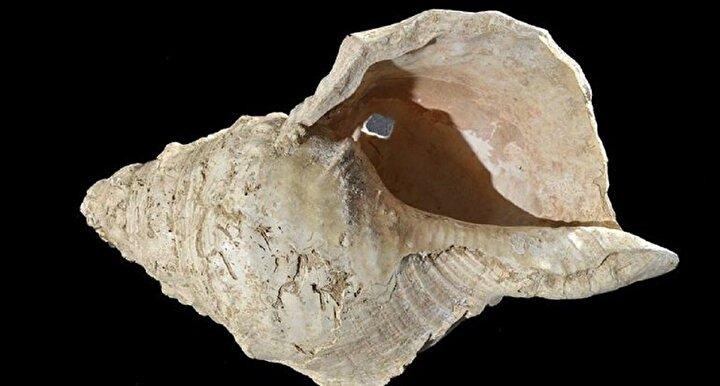 Deniz kabuğundan yapılmış, türünün bilinen en eski nefesli enstrümanı binlerce yılın ardından yeniden sesini duyurdu. Güney Fransada 1931 yılında Marsoulas mağarasında bulunan deniz kabuğunun içinde nokta benzeri işaretler olduğu ve bu işaretlerin Pirenelerdeki Marsoulas mağarasının duvarlarındaki resimlerle eşleştiği belirtildi.