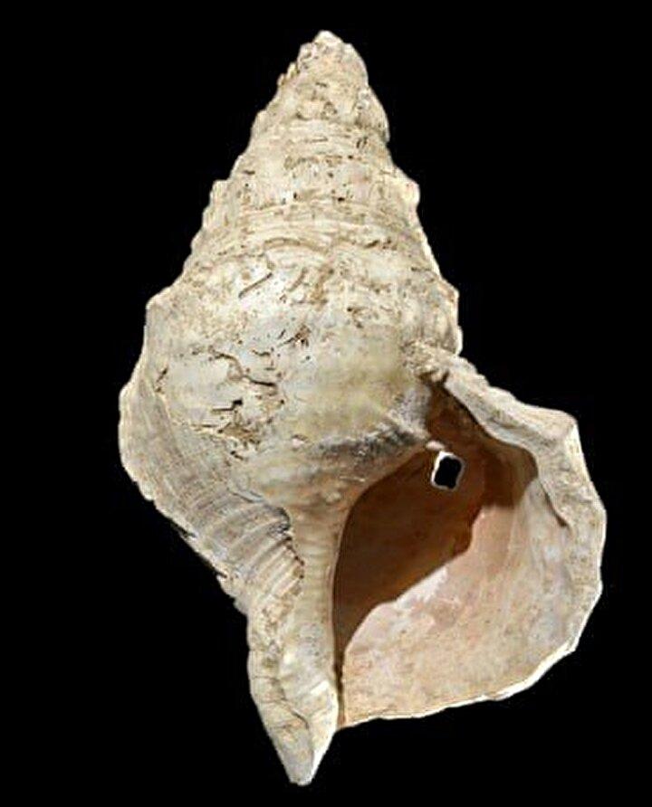 İLK DEFA BİR BAĞLANTI KURULDUToulouse Üniversitesinden Gilles Tosello, Bu, deniz kabuğu ile mağaranın duvarlarındaki imgeler arasında güçlü bir bağlantı var dedi ve Bildiğimiz kadarıyla, Avrupanın tarih öncesinde ilk defa müzik ve mağara sanatı arasında bir ilişki ortaya koyabiliyoruz diye ekledi.