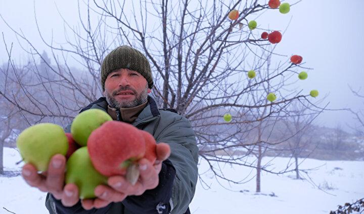 Taşkent ilçesi Balcılar Mahallesinde yaşayan Hasan Hüseyin Kahriman, Orta Toroslarda kış mevsiminin zorlu geçtiği bölgelerde kuru ağaç dallarına elmalar takarak yaban hayatında yiyecek arayan hayvanların karnını doyuruyor.