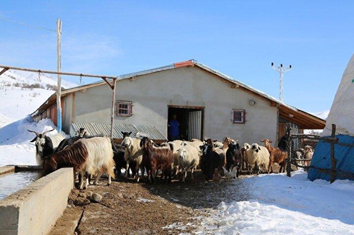 """Köye yerleşirken hiçbir maddi imkanı olmadığı ve işe sıfırdan başladığını ifade eden Eroğlu, """"Yaklaşık iki yıl önce inşaata başladım. Bu gördüğünüz yerler iki, iki buçuk yıl içinde yapıldı. Şu an burada koyun, keçi besliyorum. Süt satıyoruz, tulum peyniri, salamura peynir yapıyoruz..."""