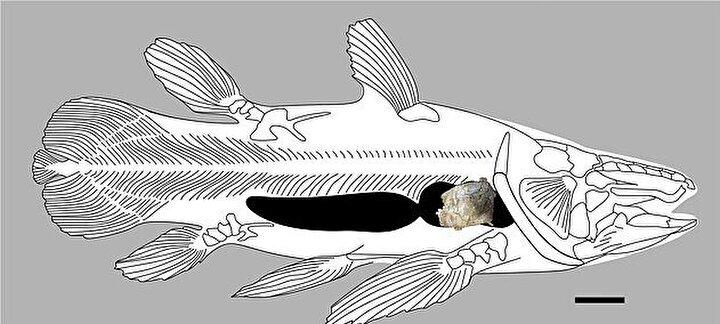4.88 METRE UZUNLUĞUNDA  Martill, Bu özel balık muazzamdı. Muhtemelen şimdiye kadar keşfedilen en büyük Coelacanth dedi.