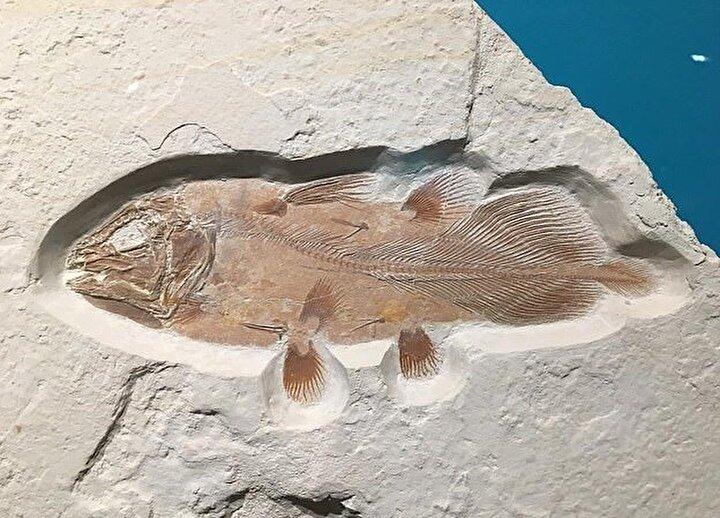 Portsmouth Üniversitesinde paleontolog olan David Martillin, özel bir koleksiyoncu tarafından satın alınan ve bir uçan yırtıcı sürüngenin kafatası parçası olduğu düşünülen büyük bir kemiği tanımlaması istendi.