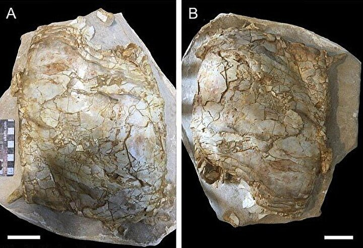 Arkeologlar, fosil kemiğinden yola çıkarak yaptıkları araştırmada balık fosilinin 4.88 metre uzunluğunda olduğunu belirledi.