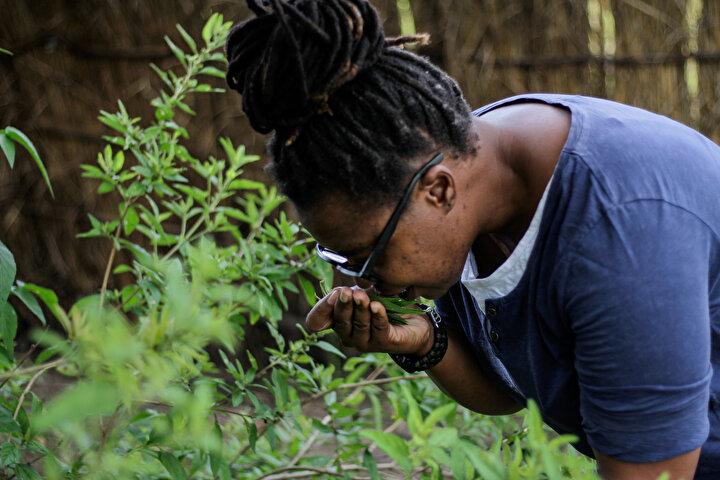 Zimbabveli doktor Henry Madzorera, Zumbani bitkisine bir şans verilebilir, sadece Batı tıbbına güvenmemeliyiz, denenebilecek birçok bitki var. dedi.
