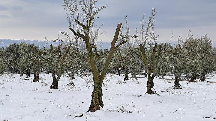 Adeta bahar havası gibiydi. Bitkilerin gövdelerinde ve dallarındaki su miktarı çok yüksekti. Aniden bastıran kardan sonra gelen don bitkilerin içindeki suyu dondurarak olması gerekenden çok daha fazla etkileyerek hasar verdi.