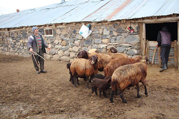 """Bakan Pakdemirlinin talimatıyla bir çalışma başlatan Tarım ve Orman İl Müdürü Burhan Bahadır ile Koyun Keçi Yetiştiricileri Birliği Başkanı Ali Kaysadu, kentteki diğer üreticilerle görüşerek Aralın durumunu iletti.Bunun üzerine diğer üreticiler de birer ikişer adet kuzuyu kurum amirlerine teslim ederek, telef olan 95 kuzunun yerine yine 95 adet kuzuyu Arala teslim etti.Kuzuları görünce mutlu olan Cengiz Aral, """"Bakan beye çok teşekkür ederim, çok mutlu oldum Allah razı olsun"""" diyerek teşekkür etti."""
