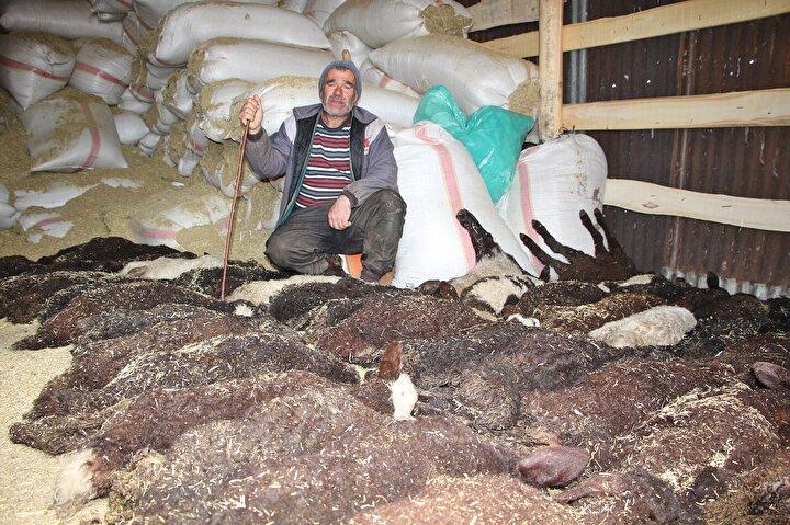Karlıova ilçesine bağlı Kargapazarı köyünde besicilikle geçimini sağlayan Cengiz Aralın bir süre önce 100 kuzusu doğdu. Aral, kuzularının gelişimine katkısı olsun, diye veterinerden şurup istedi. Aralın iddiasına göre, veteriner, kuzu şurubu yerine yanlışlıkla koyun şurubu verdi. Bu şurubu kuzularına verdikten sonra eve giden Aral, sabah ahıra geldiğinde 95inin telef olduğunu gördü. Kuzularından 5i kalan Aral, 1 yıllık emeğinin heba olduğunu söyledi.
