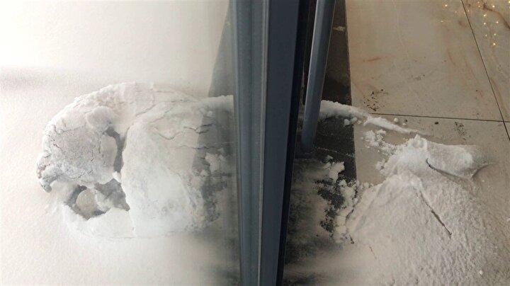 Ardından da yerinden kalkınca üzerindeki karlar döküldü. Köpek daha sonra sahibi tarafından garaja alındı.