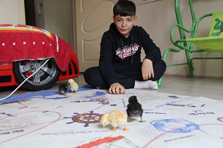 """Büyüyünce pilot olmak istediğini ifade eden Yusuf, """"Hobi olarak kendime çiftlik kuracağım. Civcivler biraz daha büyüyünce köyümüzde götüreceğim. Orada paçalı tavuklarım var, köpeklerim var, onların yanına götüreceğim."""