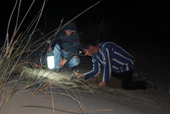İnsan aktivitesi nedeniyle tahrip edilen kumul alanlarda böceğin popülasyonuna rastlanmadığını kaydeden Prof. Dr. Gökhan Aydın, bu çekirge türünün çöl ekosistemlerinde çok önemli ve anahtar bir rolü bulunduğunu vurguladı.