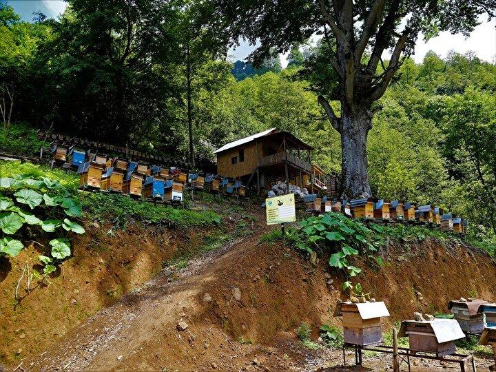 Orman Genel Müdürlüğünce (OGM) tarafından 2010 yılında Bal Ormanı fikri hayata geçirildi.