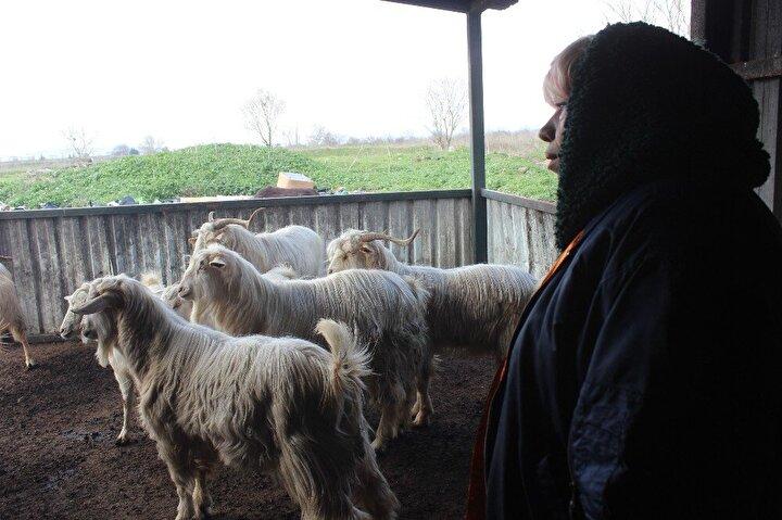 Yaşadıkları kadar yaşayacaklar. Bunlara en iyi şekilde bakmaya çalışıyoruz. Keçiler 7 taneyken ben bunlara rahat bakarım diyordum.