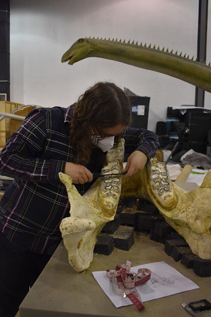 Finlandiyalı bilim insanı Juha Saarinenin çalışmalarını anlatan Başoğlu, Büyük ve tüm olan kafatası için iki gün tam çalıştı. Yurt dışında gayet saygın bir dergide yayımlanacak. Çünkü çok önemli bir fosil. dedi. Burası referans noktası olacak. Yakında Kayserinin adını da Yamulayı da dünya literatürüne yerleştirmiş olacağız. O açıdan da bizim için çok önemli bir gelişme. Bir anlamda Kayseri paleontolojide bir lider olacak, merkez olacak. ifadelerini kullandı.