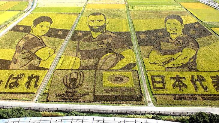 Japon çiftçiler Ragbi oyuncularını pirinç tarlalarına resmetti
