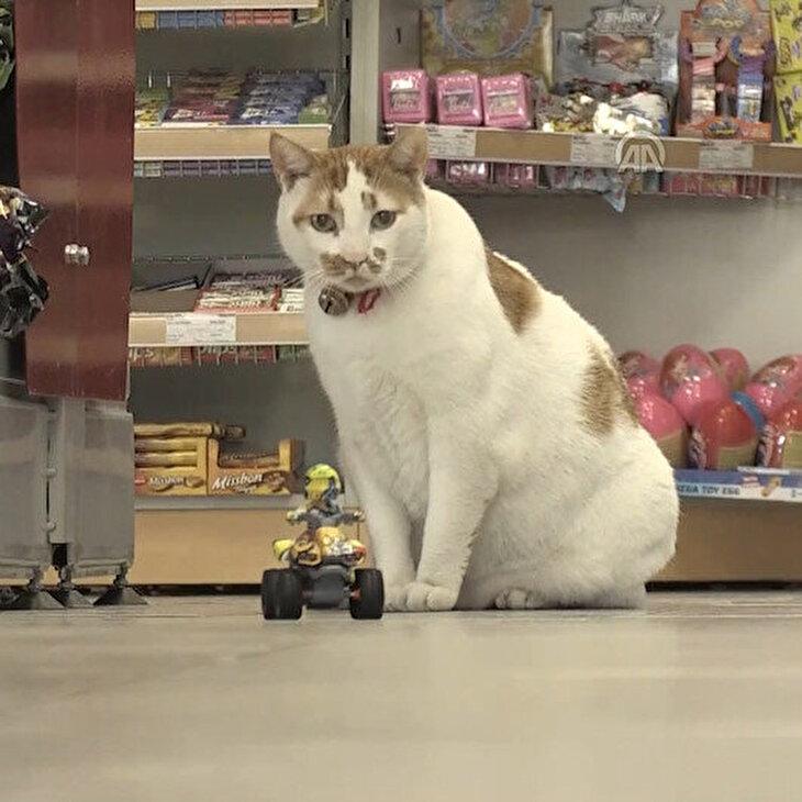Obez kedi 'Minik' akaryakıt istasyonunun maskotu oldu