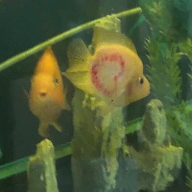 İki sırtında da kalp şekli olan balık ilgi odağı oldu