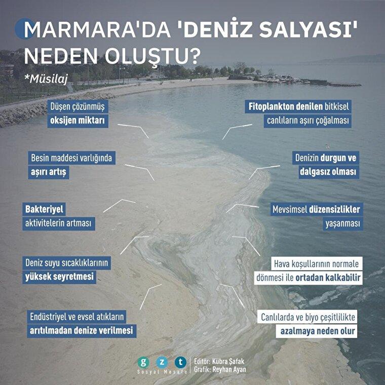 Marmara Denizi'ndeki 'deniz salyası' nedir, neden oldu?