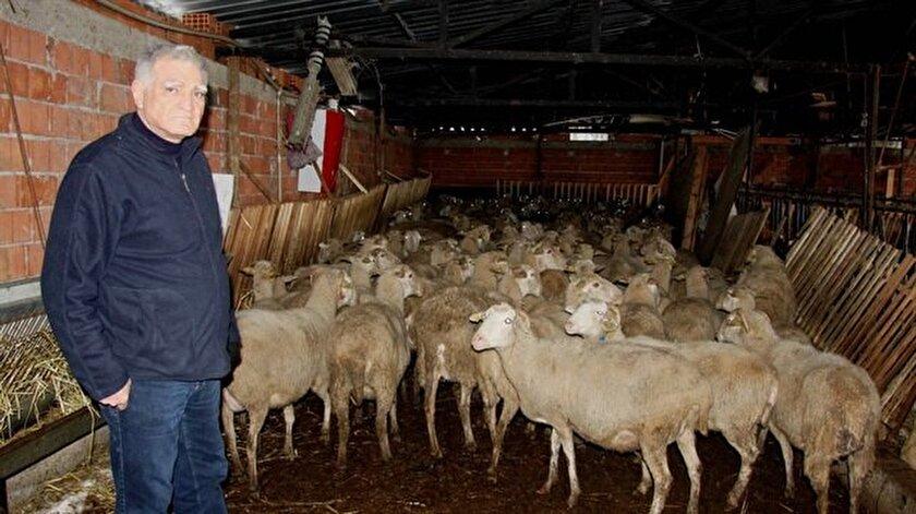 Ziraatçılardan 300 koyun çağrısı
