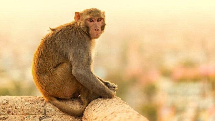 Maymun bebeği kaçırmadan 15 dakika önce 14 yaşındaki bir kız çocuğuna saldırdı.
