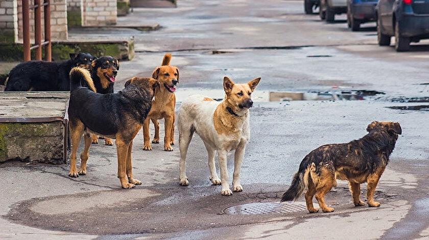 Sokak Köpekleri Saldırıları Yeniden Gündemde