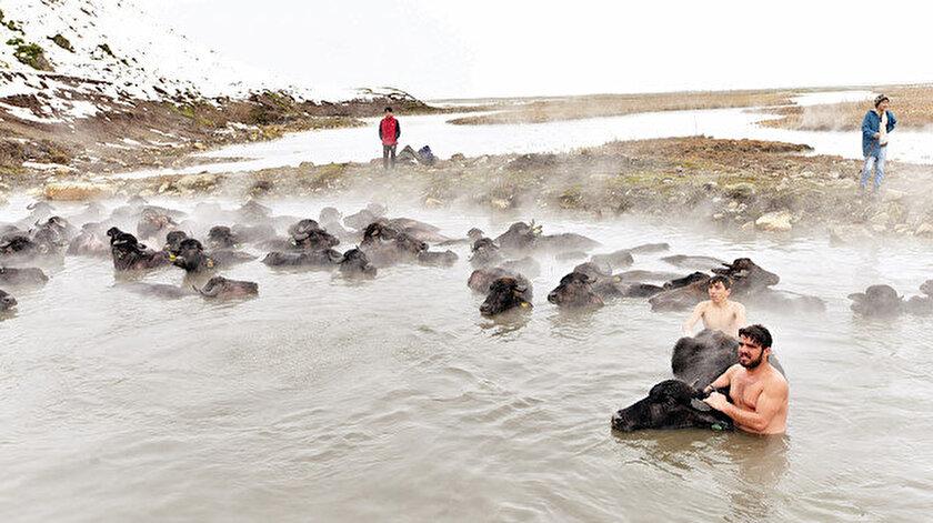 Hayvanların kaplıcada yıkanmasını görüntülemek için Türkiye'nin dört bir tarafından yüzlerce fotoğrafçı geliyor.