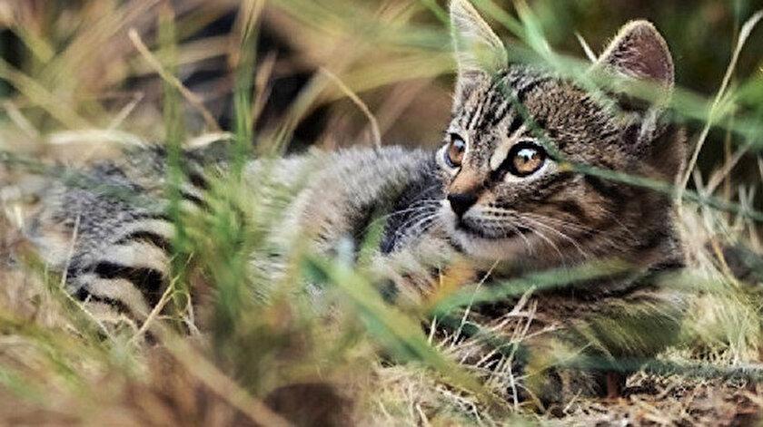 Zehirli sosis projesi, ülkede 2015 yılında başlatılan yerli vahşi yaşamı koruma girişiminin bir parçası.