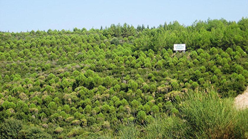 Türkiye, son 30 yılda orman alanını yüzde 6, orman servetini ise yüzde 40 artırmayı başardı.