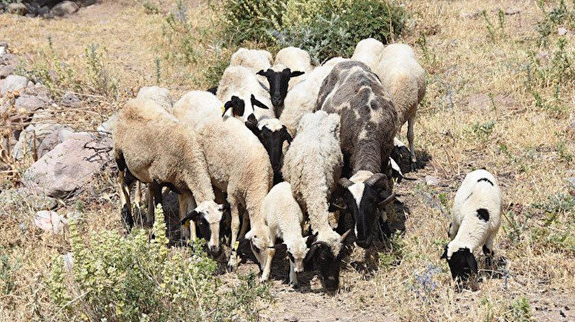 Mevcut hayvan varlığının kurbanlık ihtiyacını karşılayacağı belirtildi.