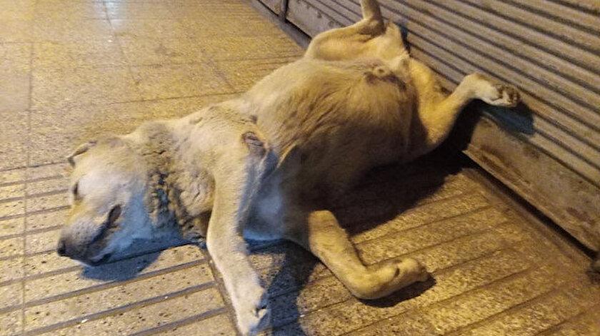 Köpeği uyuduğu anlaşılınca vatandaşlar telefonuna sarıldı