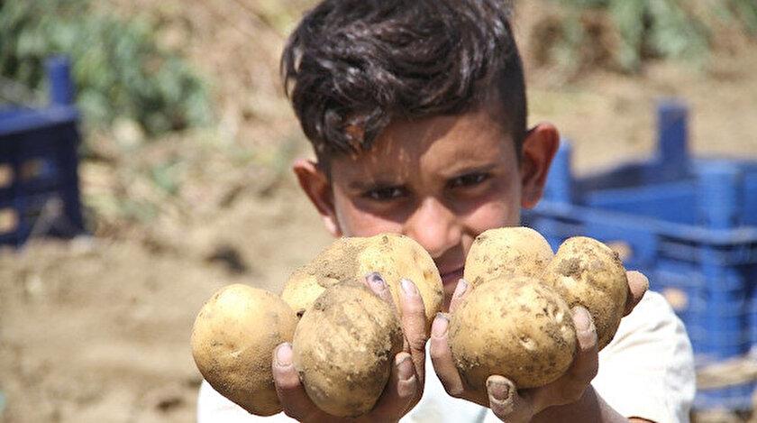 Eskişehir'de patates hasadı.