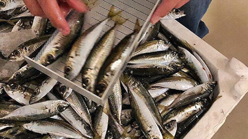 Denetimlerde, boy ölçülerine uymayan balıklara el konuldu.