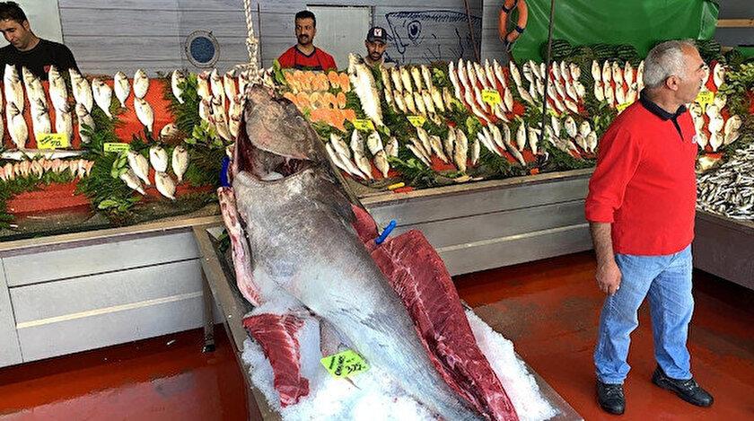 Orkinos balığı