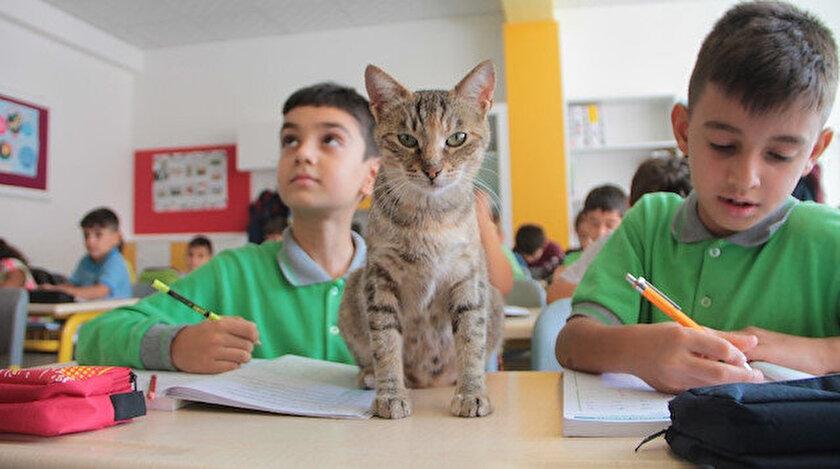 Tarçın isimli kedi, okulun neşesi haline geldi.