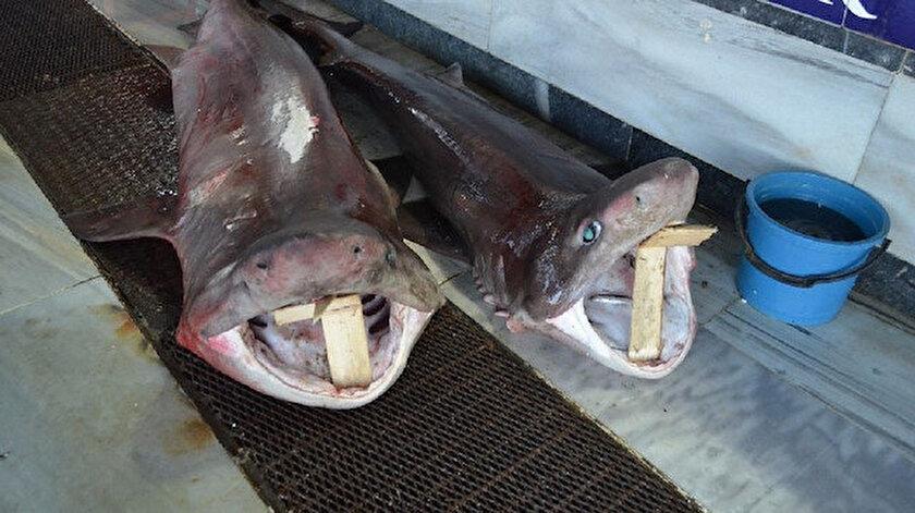 2 ve 2 buçuk metrelik 2 köpek balığı.