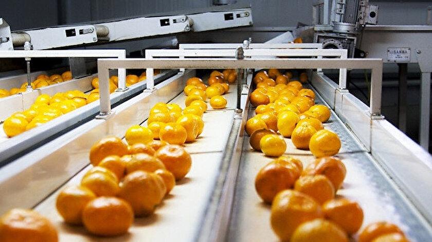 Mandarin ihracatı bu yılın ocak ayında yüzde 53 arttı