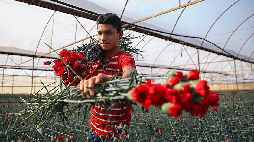 20 günde Avrupa'ya 60 milyon dal çiçek satıldı.