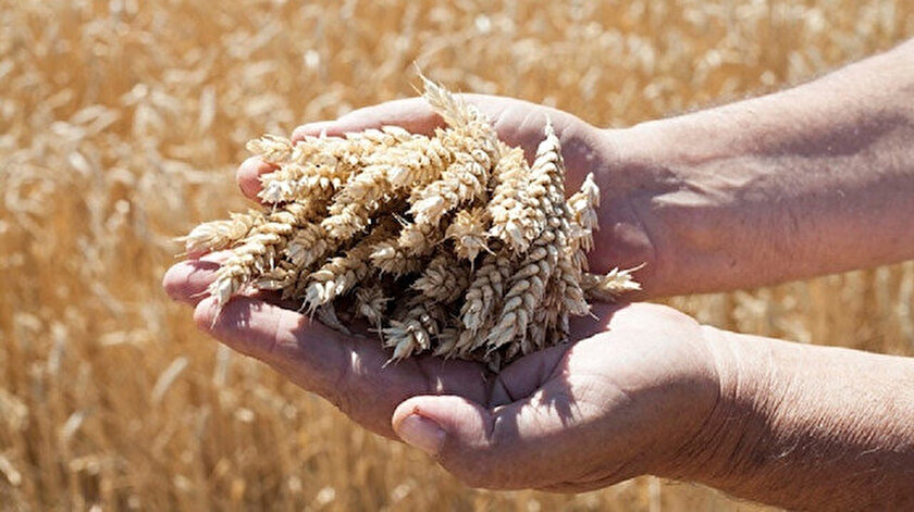 Yerli tohum çalışmalarına destek