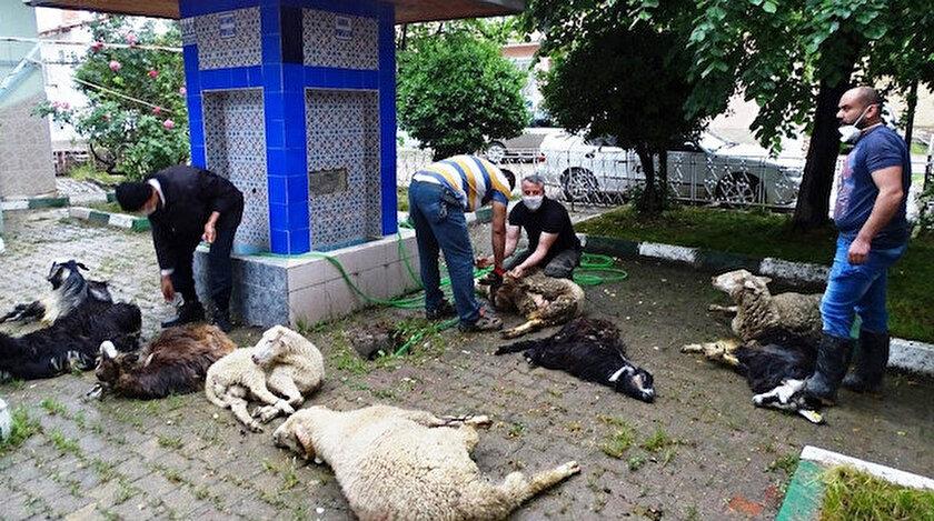 Kesilen kurban etleri ihtiyaç sahiplerine dağıtılacak.
