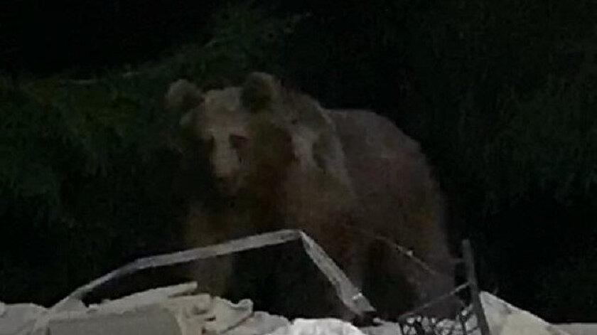 Bahçeye giren ayı böyle görüntülendi.