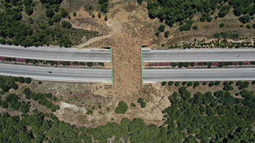 Bakanlıktan doğa dostu proje: İzmir'e yaban hayatı koruma köprüsü